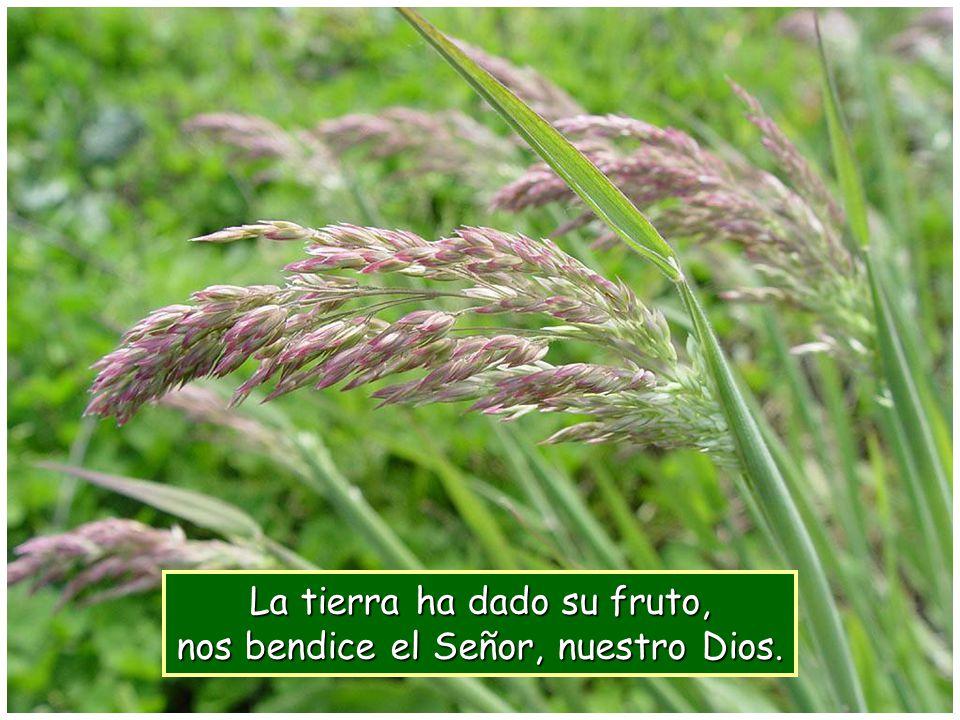 La tierra ha dado su fruto, nos bendice el Señor, nuestro Dios.