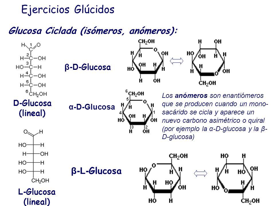 Ejercicios Glúcidos Glucosa Ciclada (isómeros, anómeros): β-L-Glucosa
