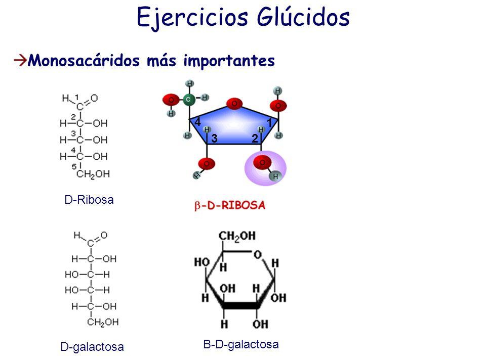 Ejercicios Glúcidos Monosacáridos más importantes 1 2 3 4 D-Ribosa