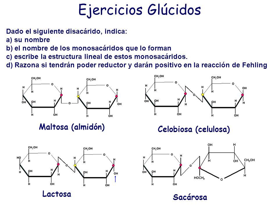 Ejercicios Glúcidos Maltosa (almidón) Celobiosa (celulosa) Lactosa