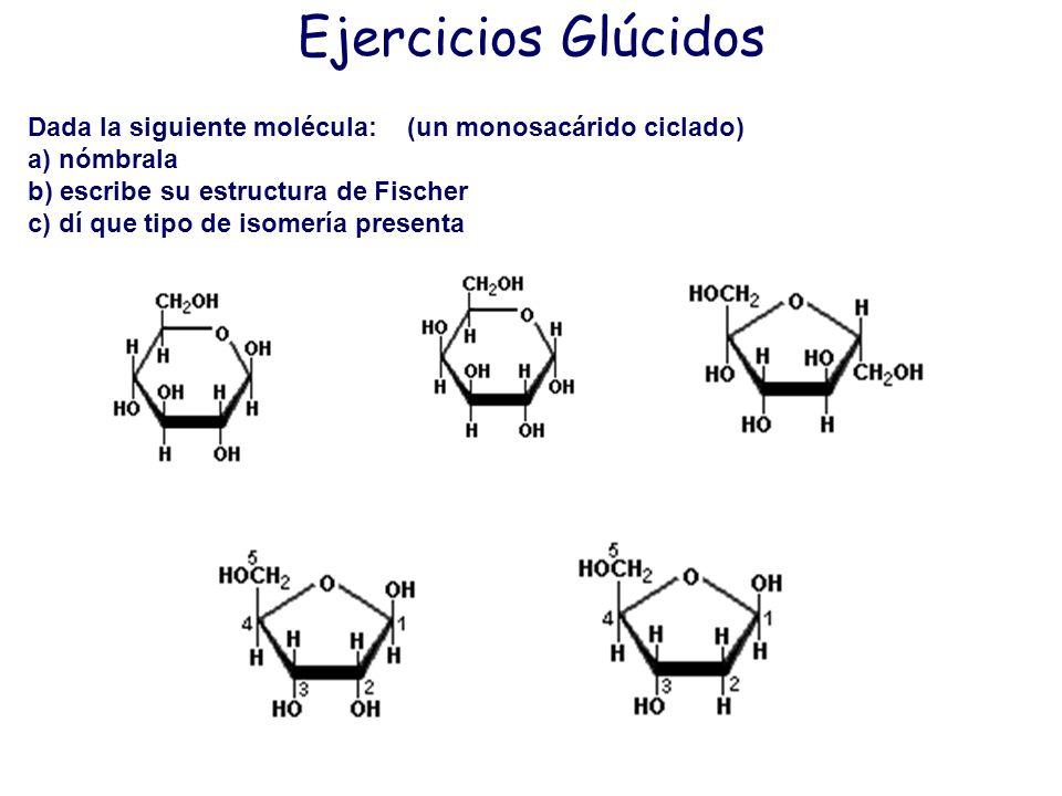 Ejercicios Glúcidos Dada la siguiente molécula: (un monosacárido ciclado) a) nómbrala. b) escribe su estructura de Fischer.