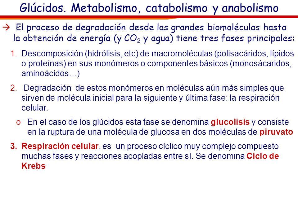 Glúcidos. Metabolismo, catabolismo y anabolismo