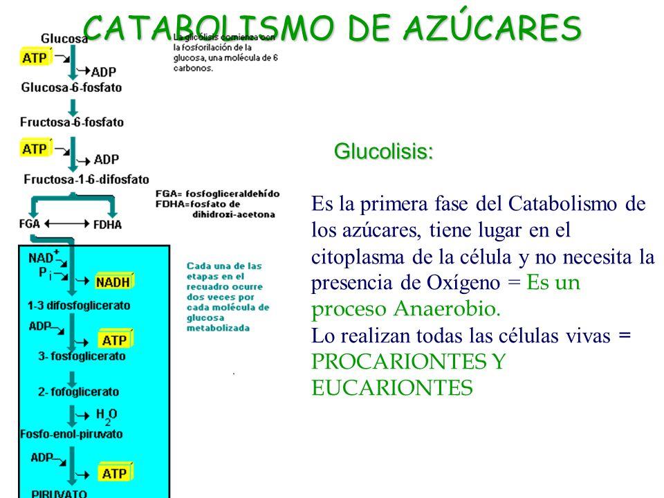 CATABOLISMO DE AZÚCARES