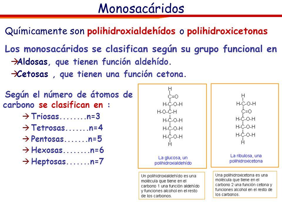 Monosacáridos Químicamente son polihidroxialdehídos o polihidroxicetonas. Los monosacáridos se clasifican según su grupo funcional en.