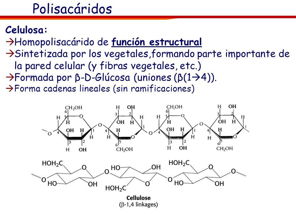 Polisacáridos Celulosa: Homopolisacárido de función estructural
