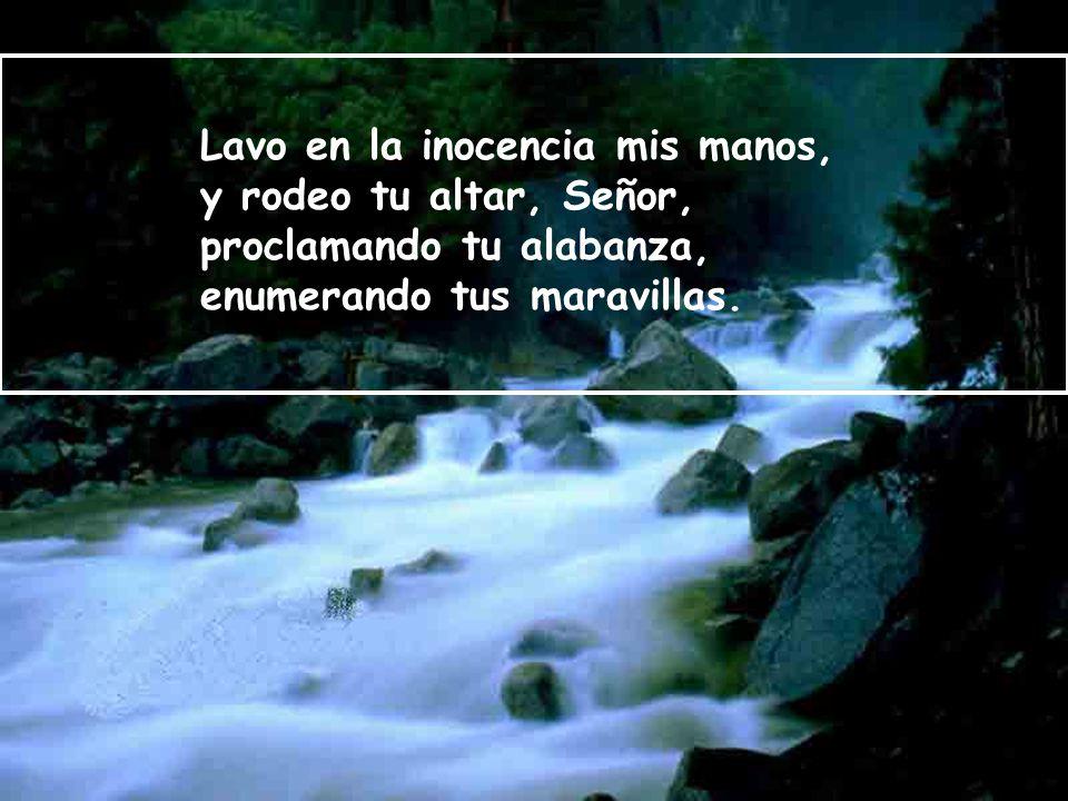 Lavo en la inocencia mis manos, y rodeo tu altar, Señor, proclamando tu alabanza, enumerando tus maravillas.