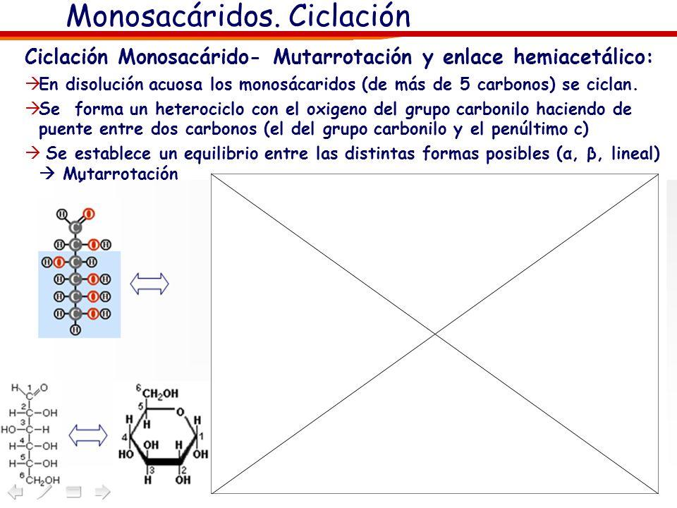 Monosacáridos. Ciclación