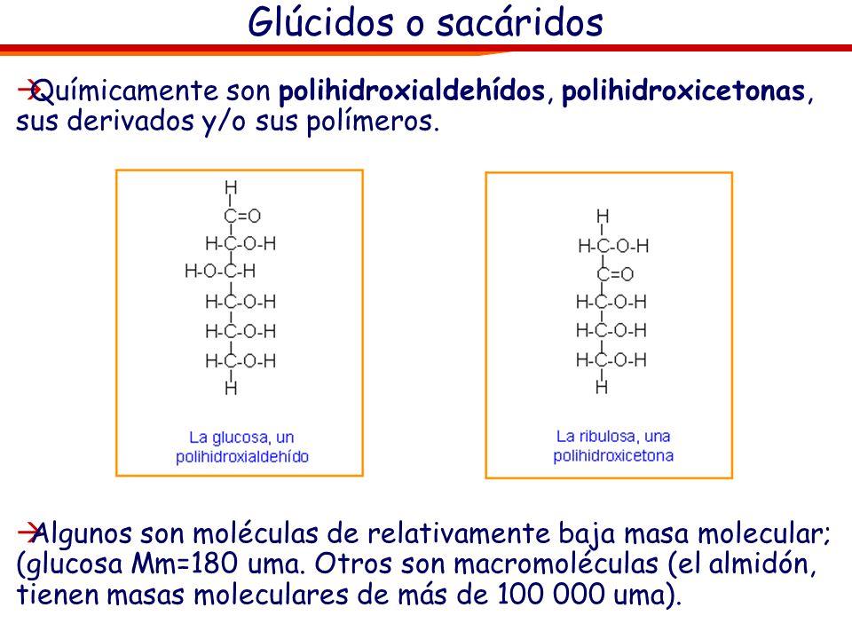 Glúcidos o sacáridos Químicamente son polihidroxialdehídos, polihidroxicetonas, sus derivados y/o sus polímeros.