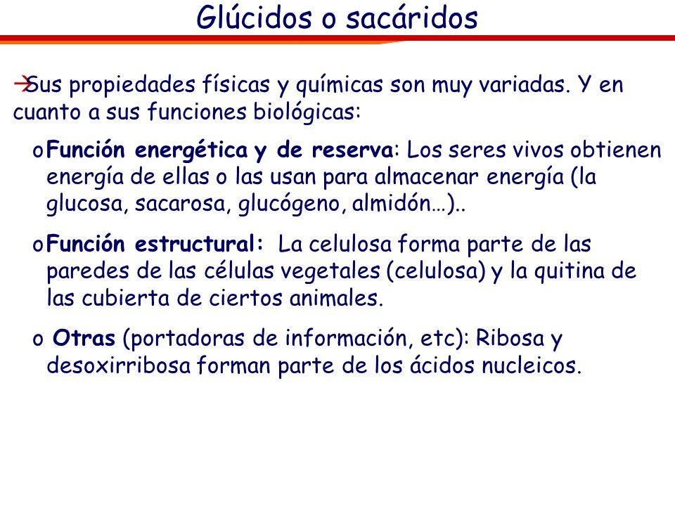 Glúcidos o sacáridos Sus propiedades físicas y químicas son muy variadas. Y en cuanto a sus funciones biológicas: