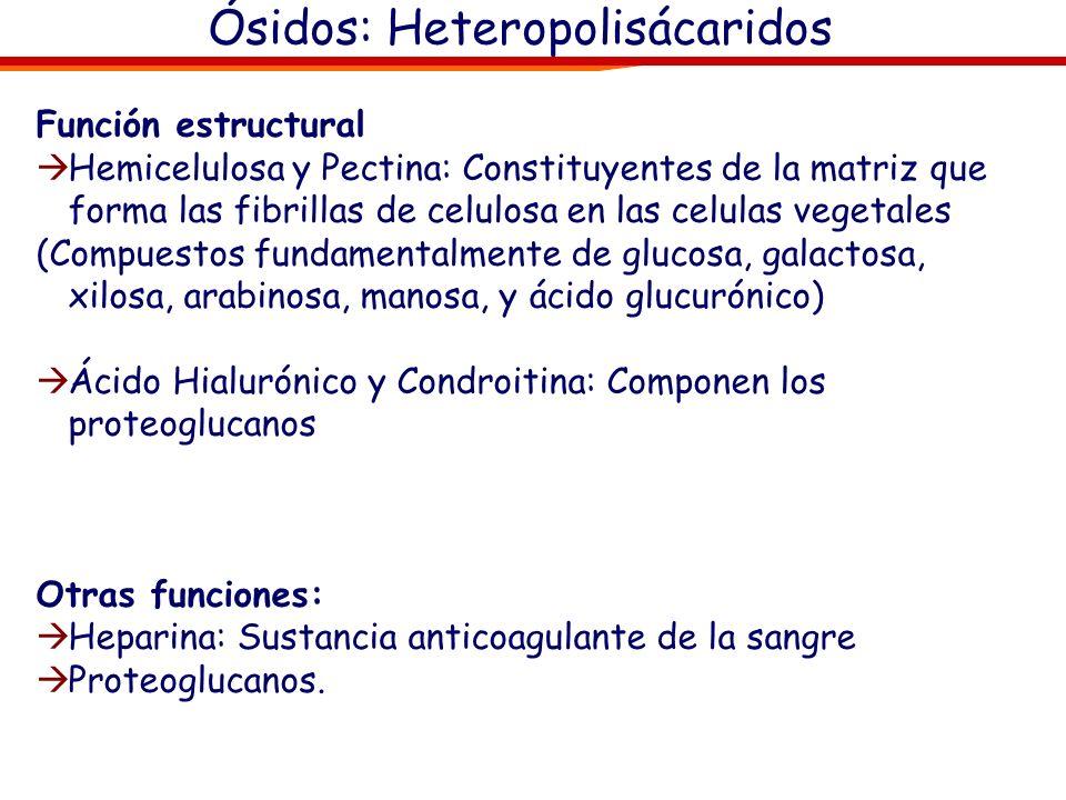 Ósidos: Heteropolisácaridos