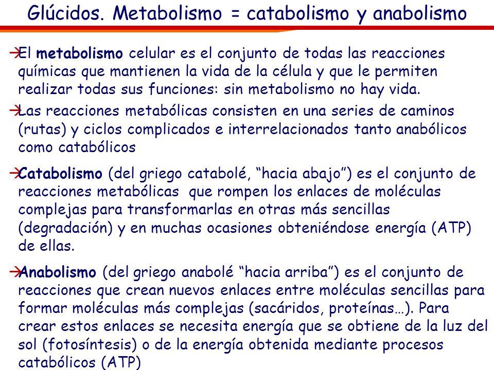 Glúcidos. Metabolismo = catabolismo y anabolismo