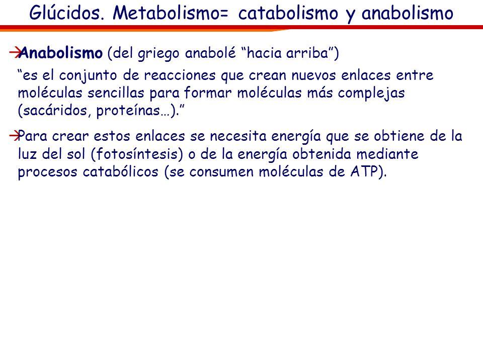 Glúcidos. Metabolismo= catabolismo y anabolismo