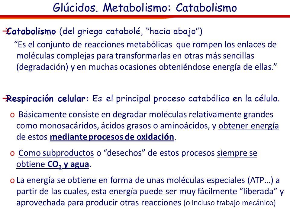 Glúcidos. Metabolismo: Catabolismo