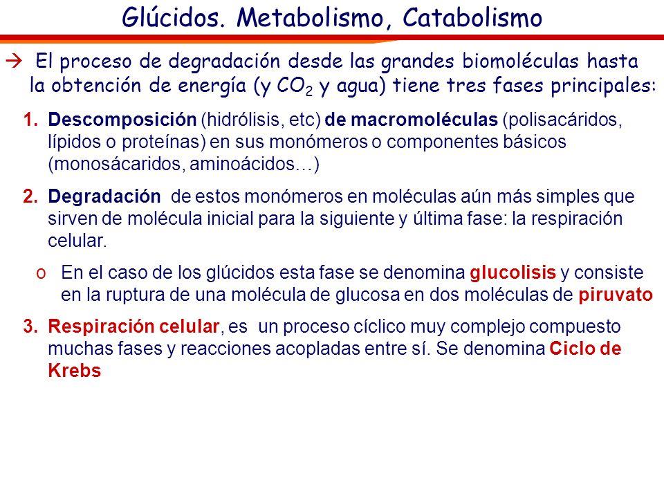 Glúcidos. Metabolismo, Catabolismo