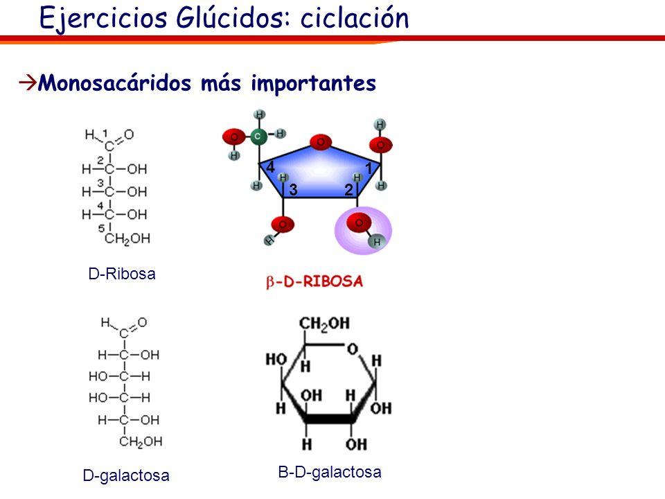 Ejercicios Glúcidos: ciclación