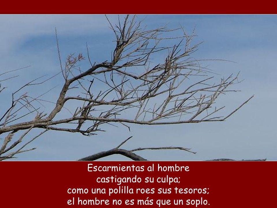Escarmientas al hombre castigando su culpa; como una polilla roes sus tesoros; el hombre no es más que un soplo.