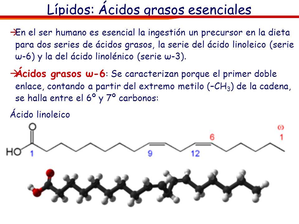 Lípidos: Ácidos grasos esenciales