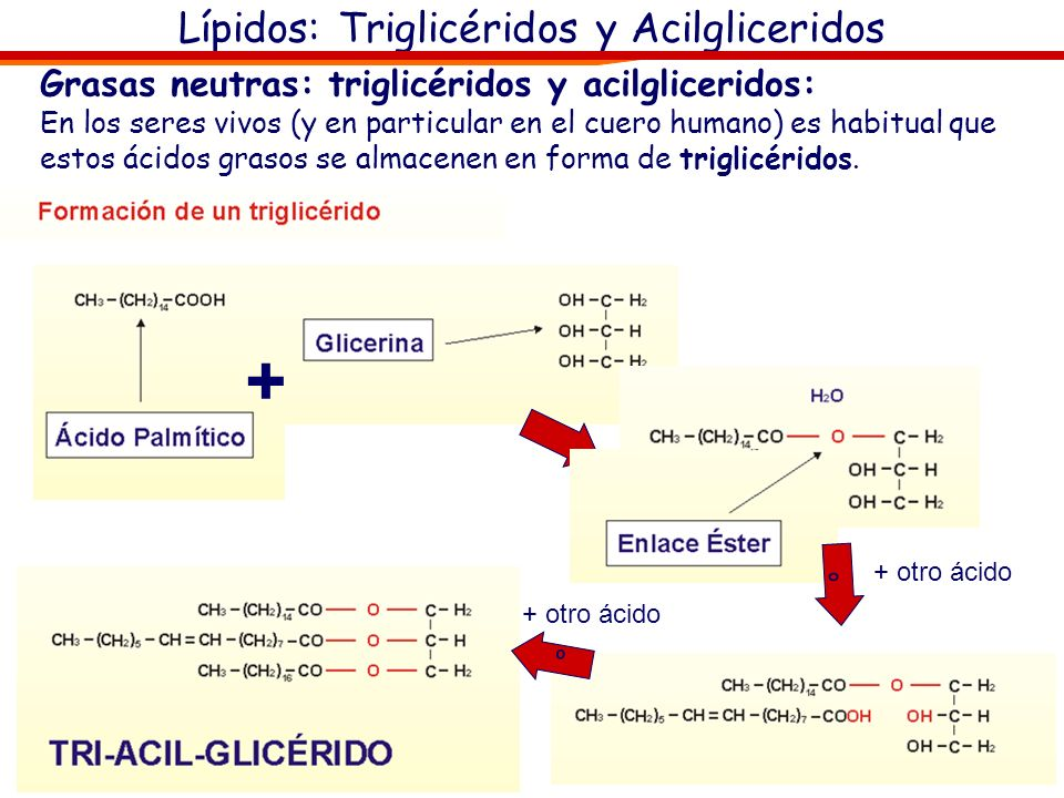 Lípidos: Triglicéridos y Acilgliceridos