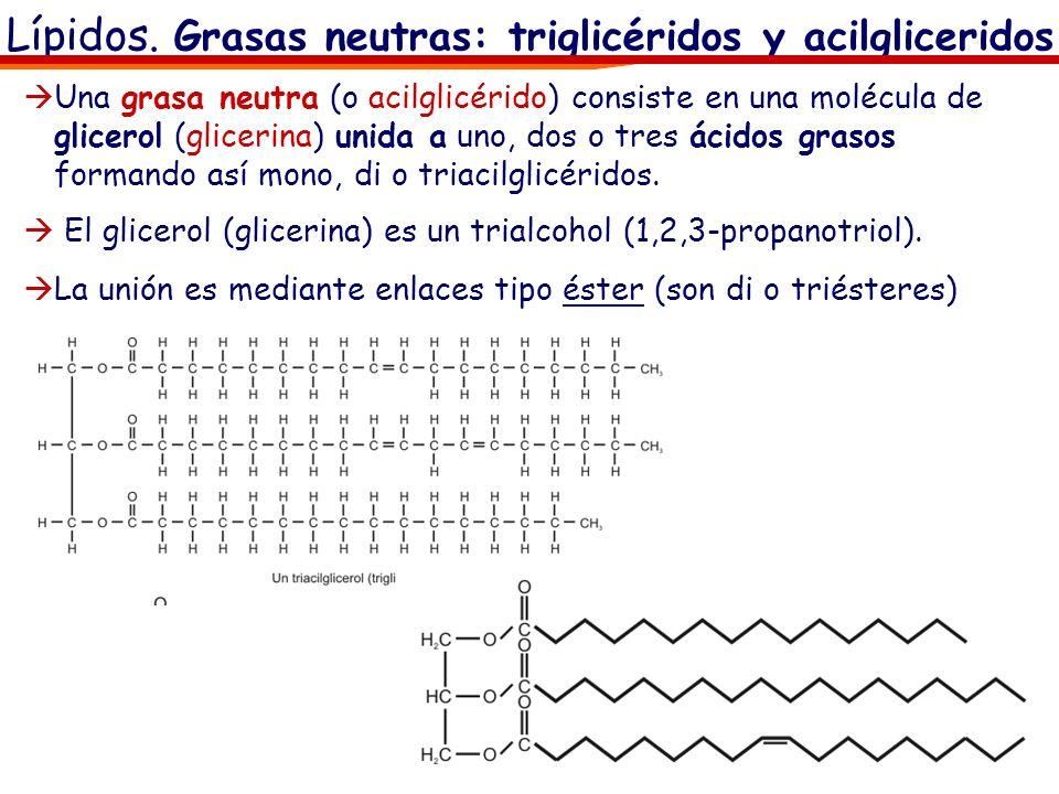 Lípidos. Grasas neutras: triglicéridos y acilgliceridos