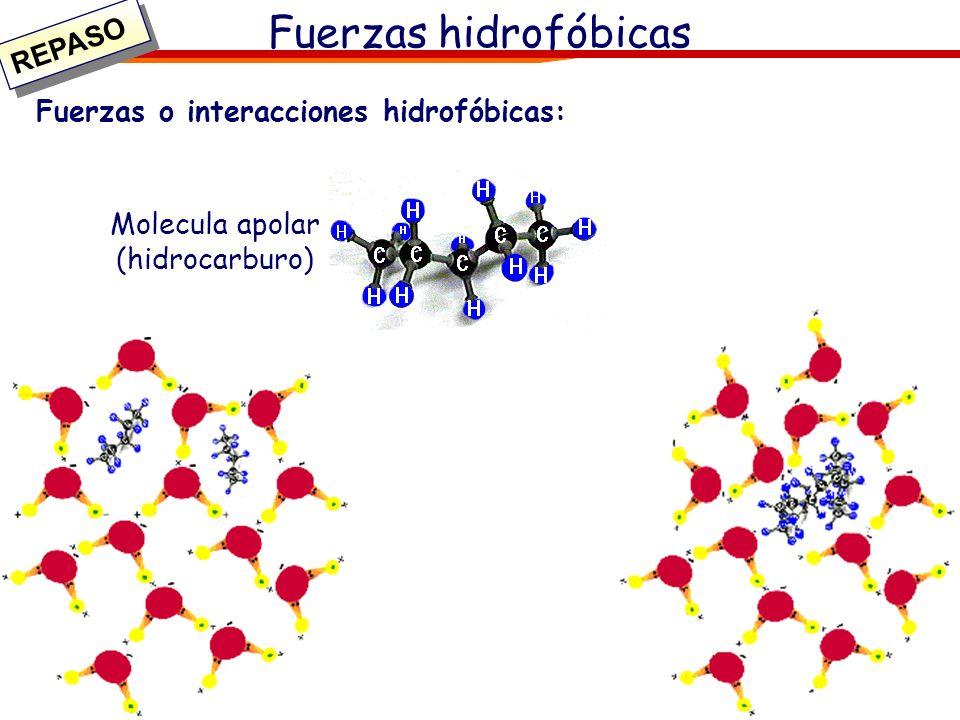 Molecula apolar (hidrocarburo)
