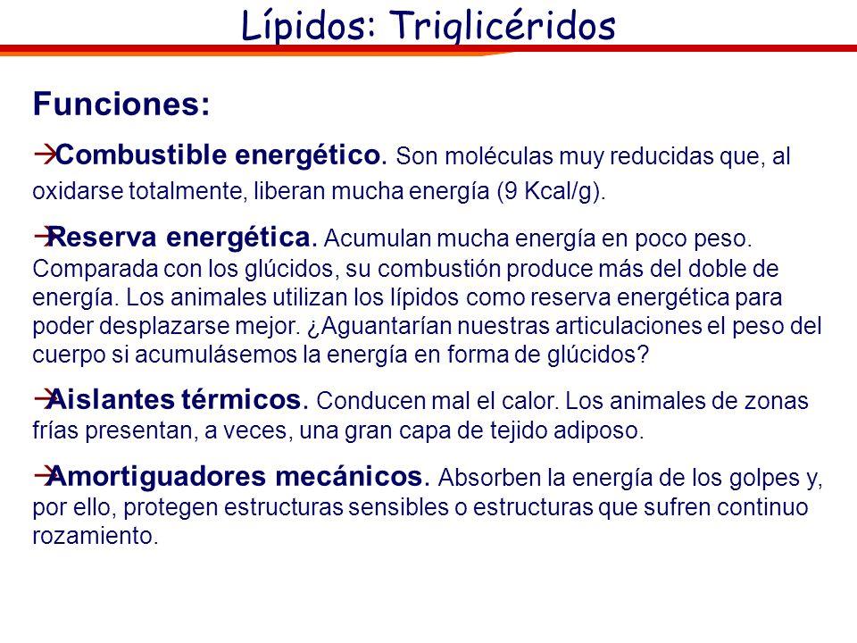 Lípidos: Triglicéridos