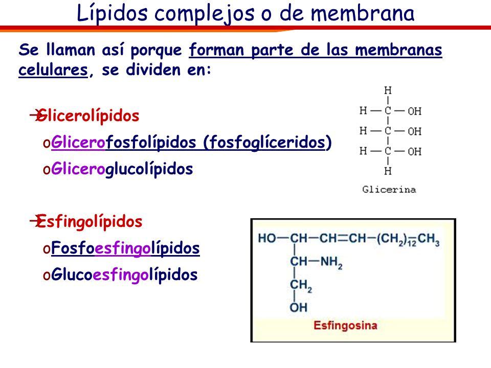 Lípidos complejos o de membrana
