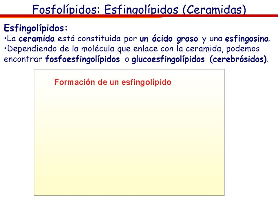 Fosfolípidos: Esfingolípidos (Ceramidas)
