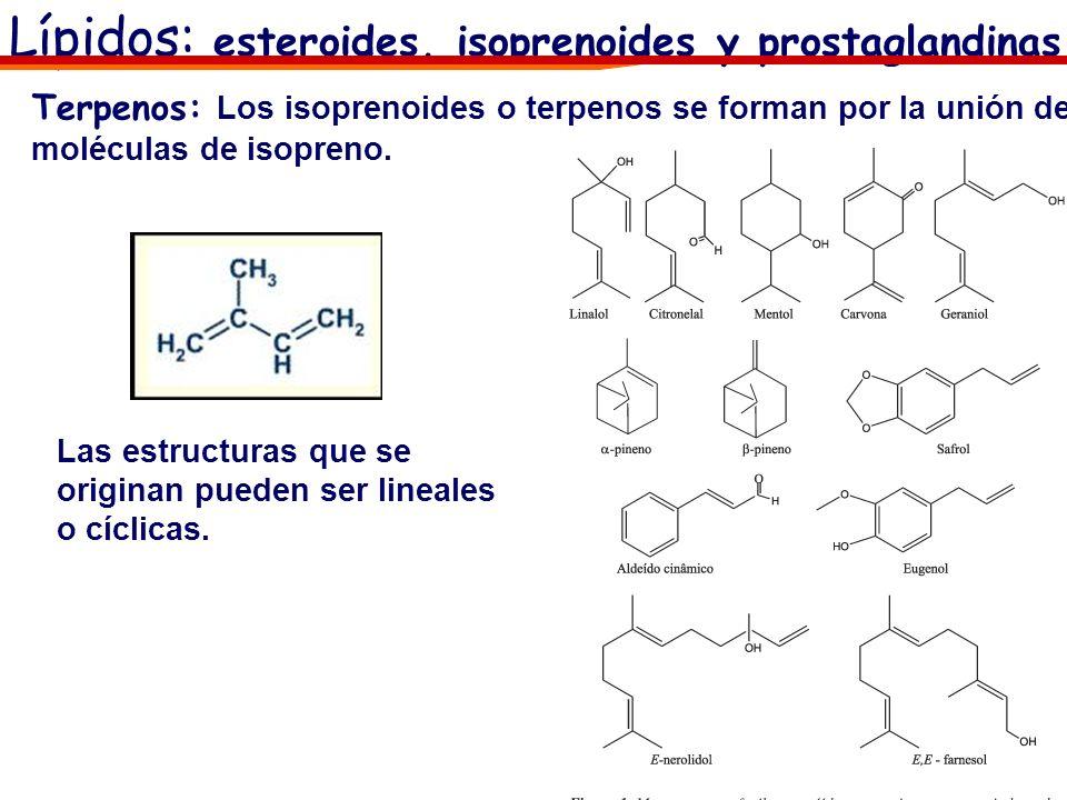Lípidos: esteroides, isoprenoides y prostaglandinas