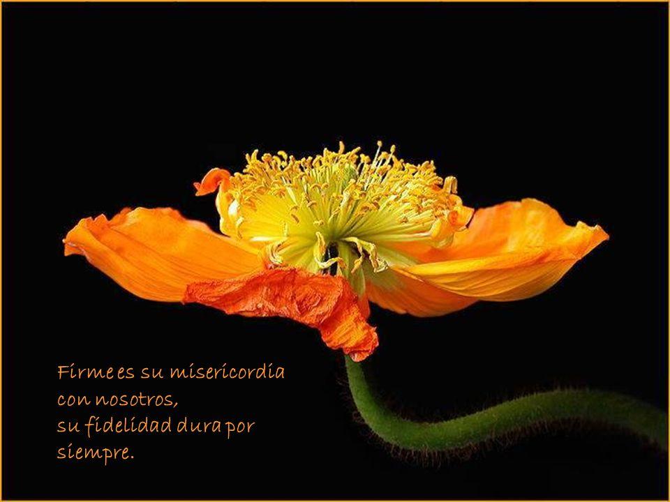 Firme es su misericordia con nosotros, su fidelidad dura por siempre.