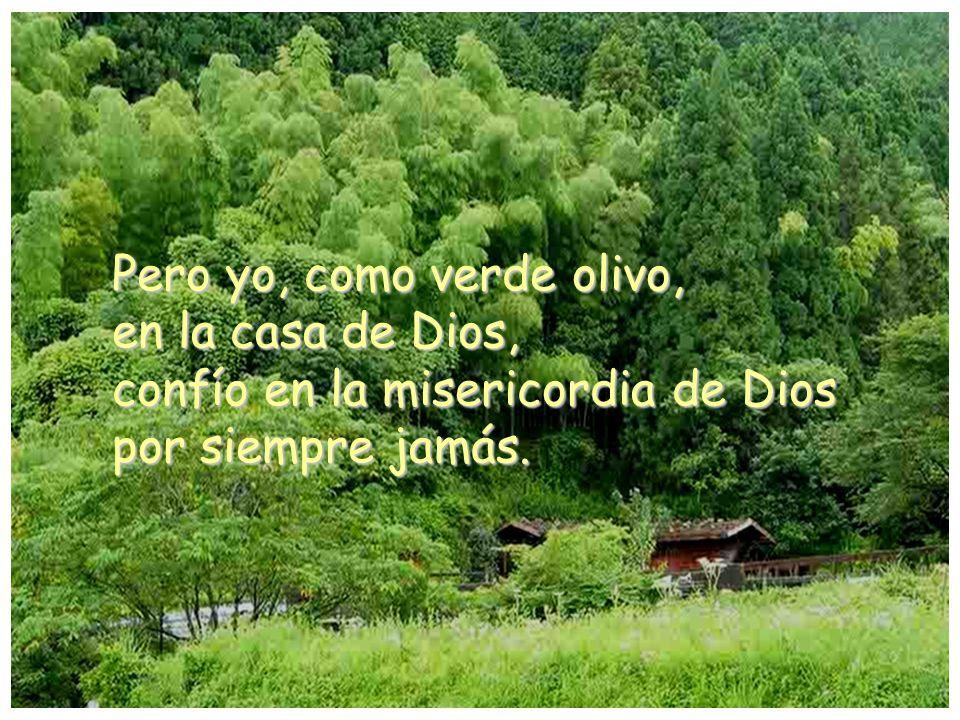 Pero yo, como verde olivo, en la casa de Dios, confío en la misericordia de Dios por siempre jamás.