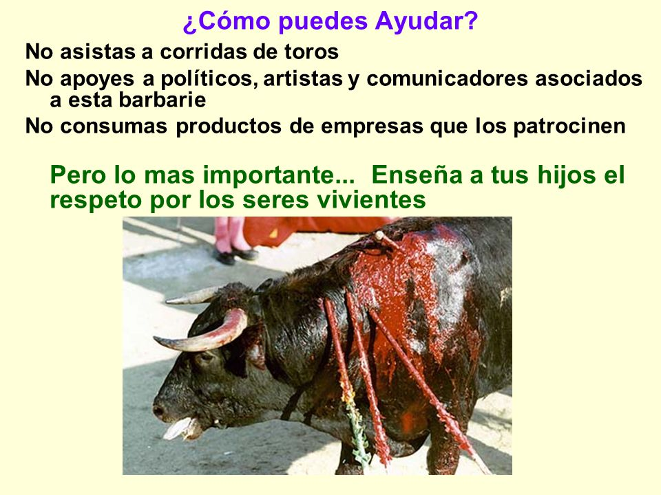 ¿Cómo puedes Ayudar No asistas a corridas de toros