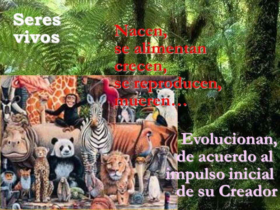Seres vivos. Nacen, se alimentan. crecen, se reproducen, mueren… Evolucionan, de acuerdo al.