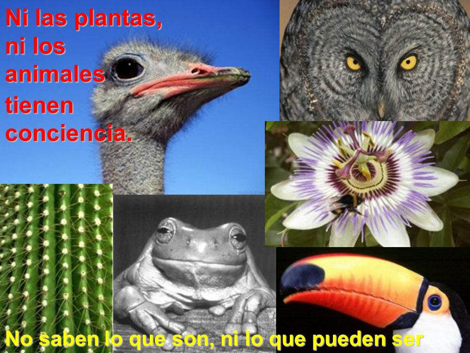 Ni las plantas, ni los animales tienen conciencia.