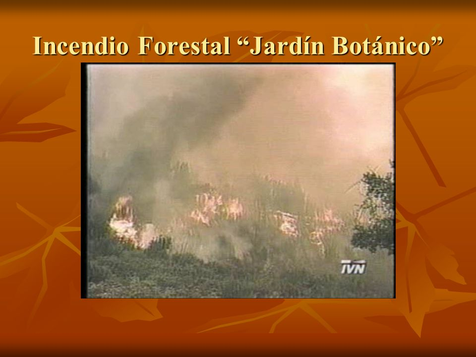 Incendio Forestal Jardín Botánico