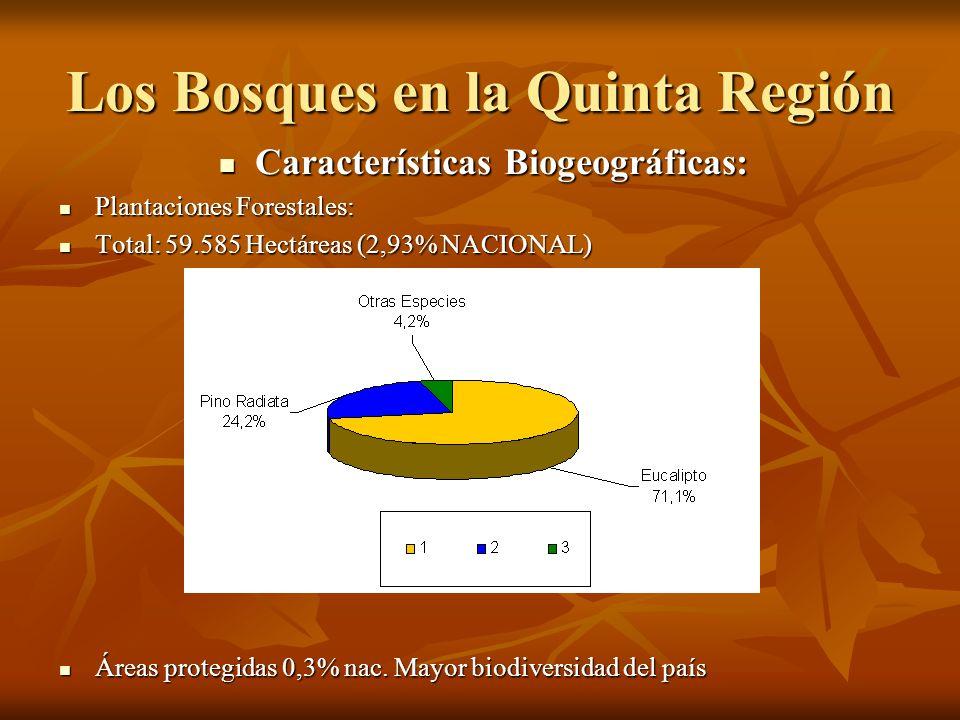 Los Bosques en la Quinta Región
