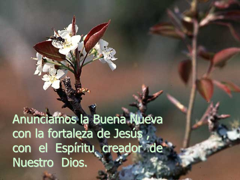 Anunciamos la Buena Nueva con la fortaleza de Jesús , con el Espíritu creador de Nuestro Dios.