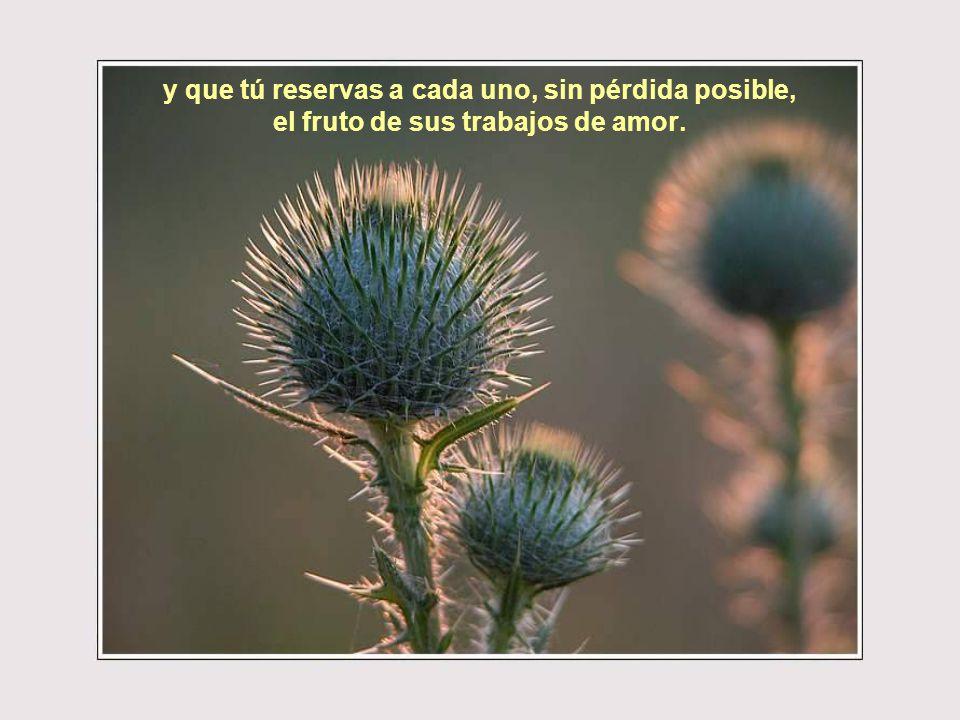y que tú reservas a cada uno, sin pérdida posible, el fruto de sus trabajos de amor.