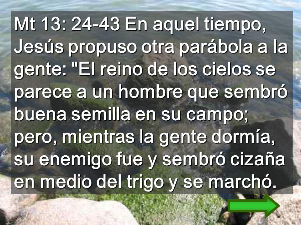 Mt 13: 24-43 En aquel tiempo, Jesús propuso otra parábola a la gente: El reino de los cielos se parece a un hombre que sembró buena semilla en su campo; pero, mientras la gente dormía, su enemigo fue y sembró cizaña en medio del trigo y se marchó.