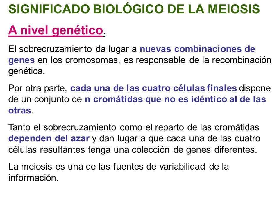 SIGNIFICADO BIOLÓGICO DE LA MEIOSIS A nivel genético.
