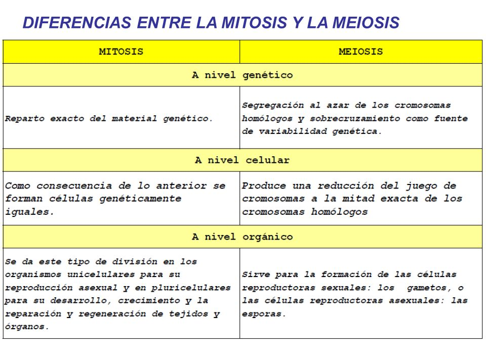 DIFERENCIAS ENTRE LA MITOSIS Y LA MEIOSIS