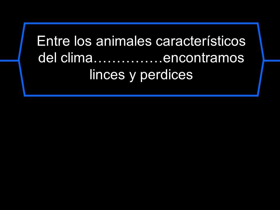 Entre los animales característicos del clima……………encontramos linces y perdices