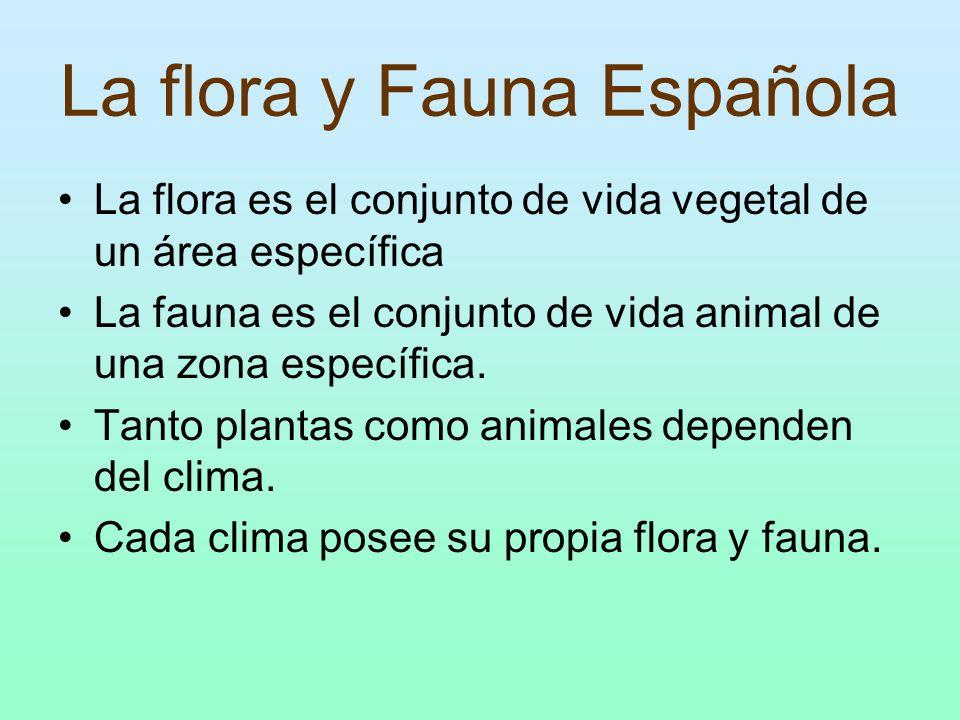 La flora y Fauna Española