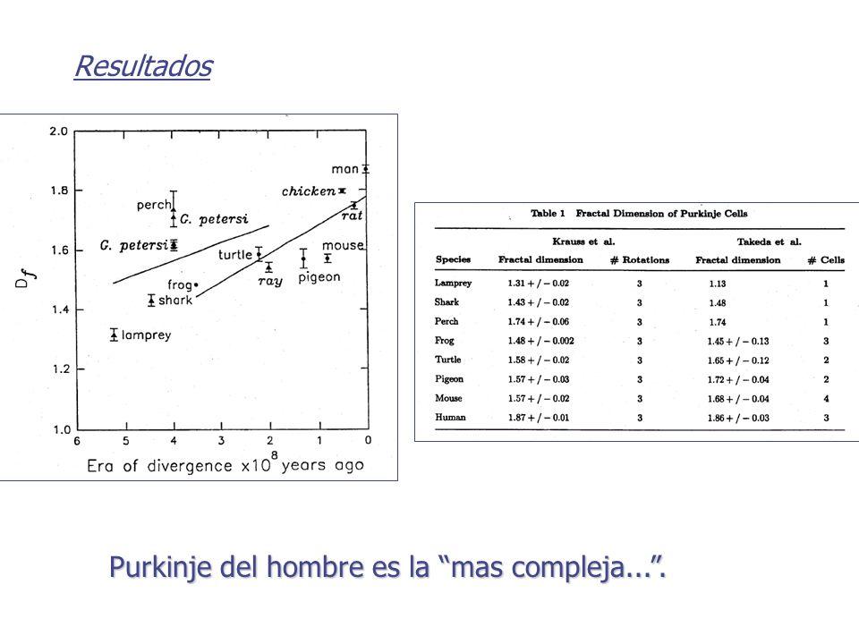 Resultados Purkinje del hombre es la mas compleja... .