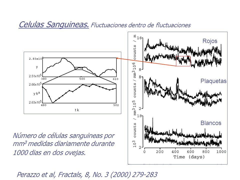 Celulas Sanguineas. Fluctuaciones dentro de fluctuaciones