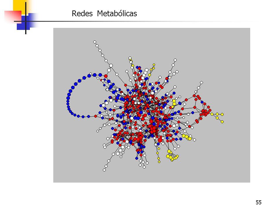 Redes Metabólicas