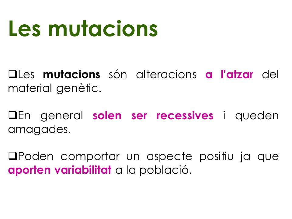 Les mutacions Les mutacions són alteracions a l atzar del material genètic. En general solen ser recessives i queden amagades.