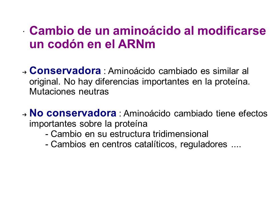 · Cambio de un aminoácido al modificarse un codón en el ARNm