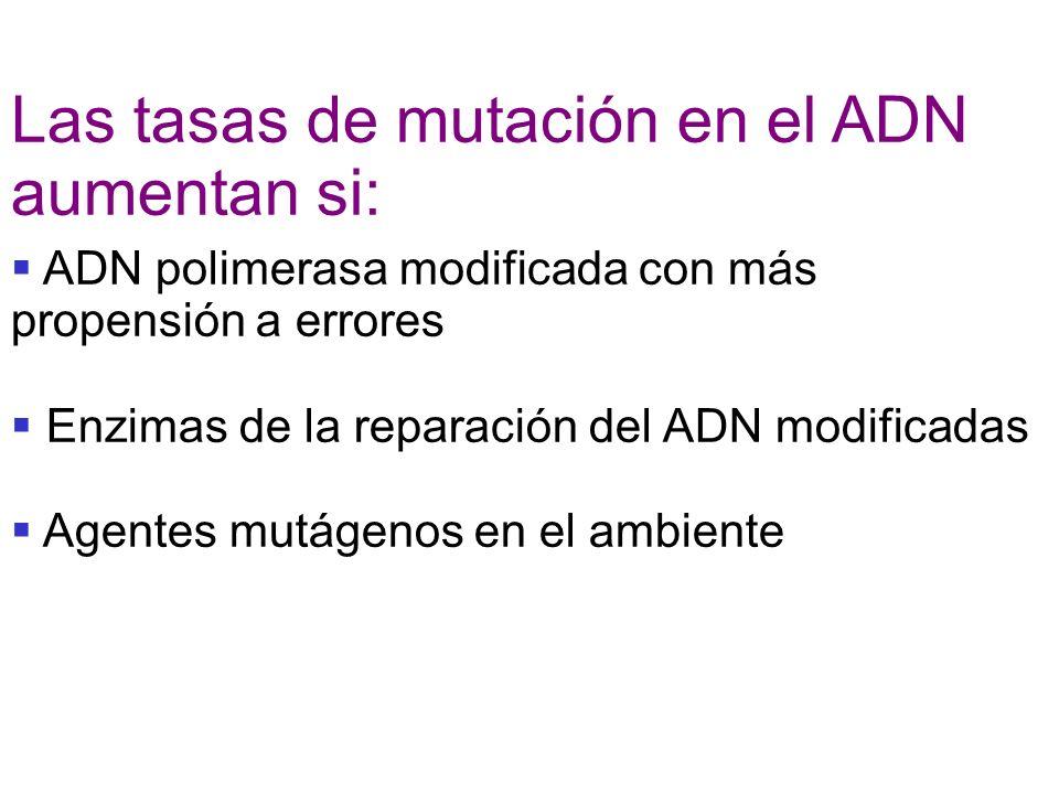 Las tasas de mutación en el ADN aumentan si: