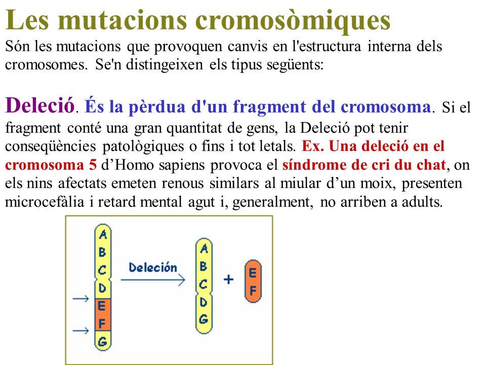 Les mutacions cromosòmiques