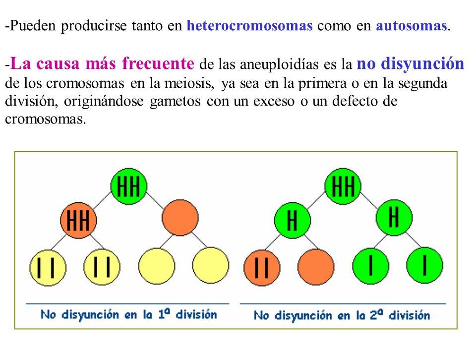 -Pueden producirse tanto en heterocromosomas como en autosomas.
